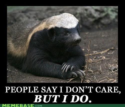 laughable Honey Badger memes