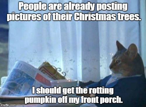 laughable I Should Buy a Boat Cat memes