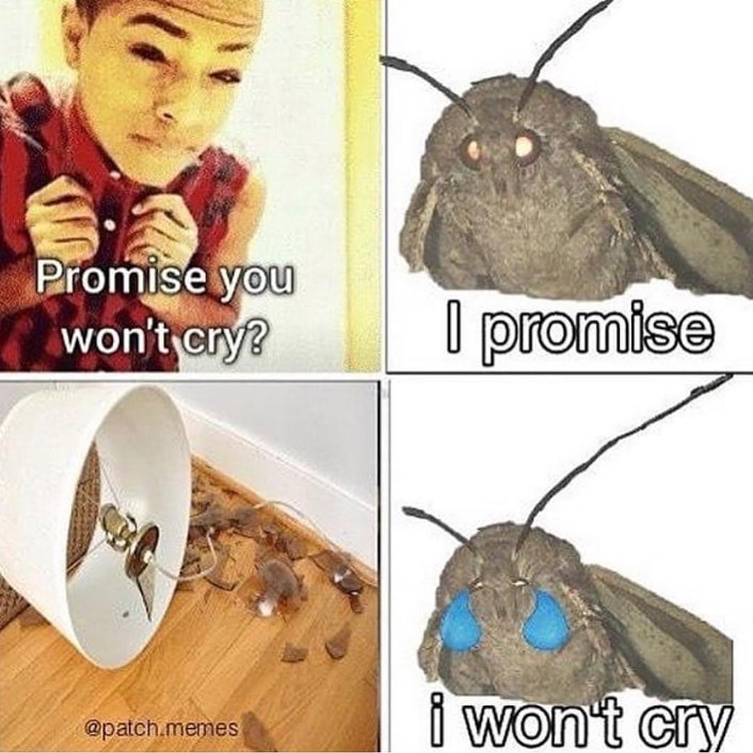 lively Moth Lamp memes