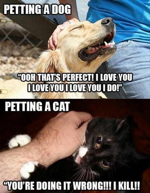 lively pet memes