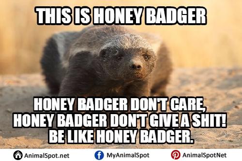 rib-tickling Honey Badger memes