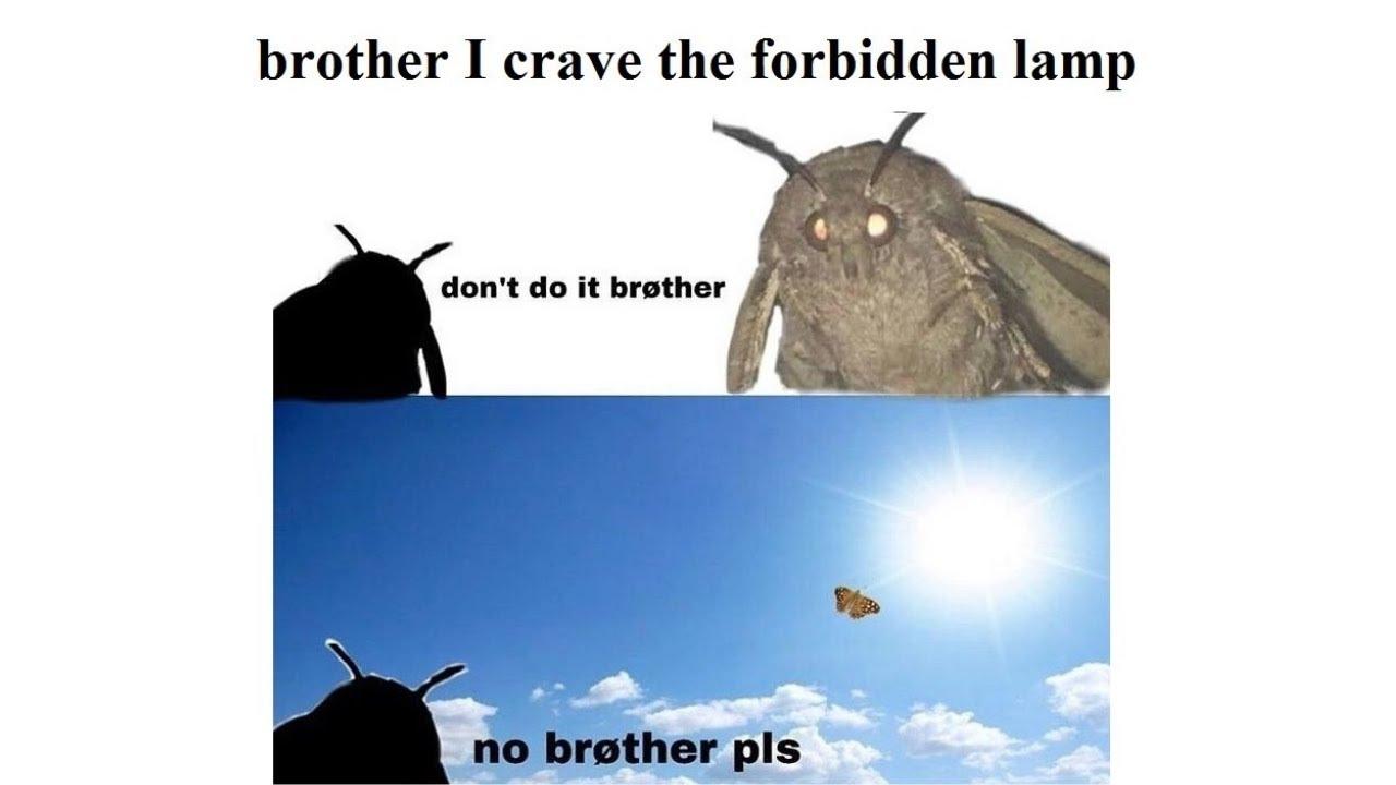 sparkling Moth Lamp memes