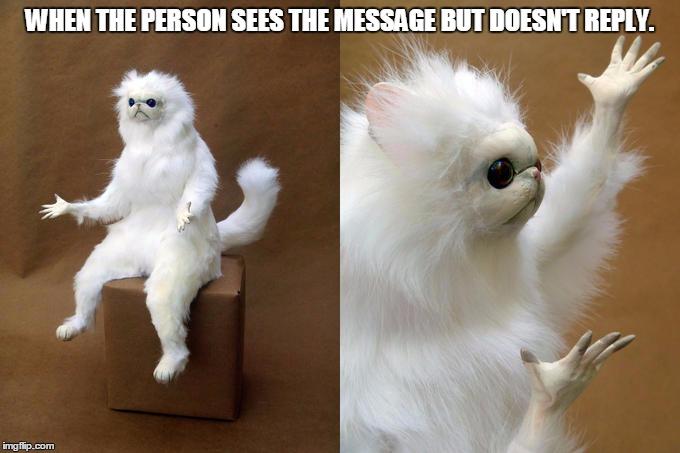 Funny Persian Cat memes