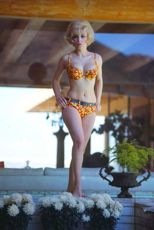 Stella Stevens lingerie pics