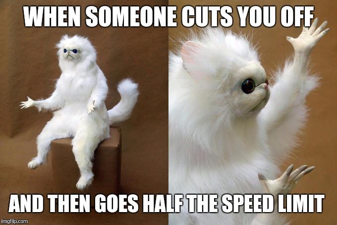 amusing Persian Cat memes