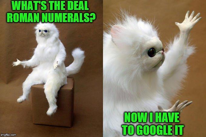 droll, Persian Cat memes