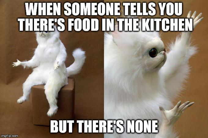 entertaining Persian Cat memes
