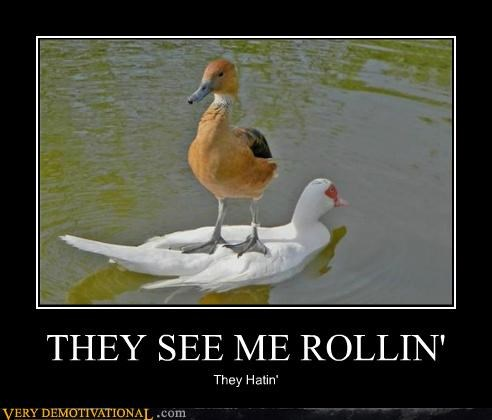 entertaining They See Me Rollin memes