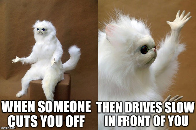 lively Persian Cat memes