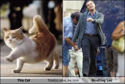 comical Strutting Leo memes