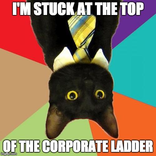 Hilarious Business Cat memes