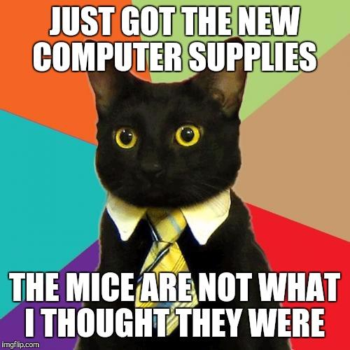 amusing Business Cat memes