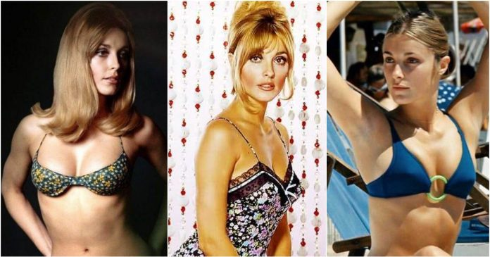 51 Sexiest Sharon Tate Boobs Pictures Will Make You Envy The Photographer